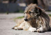 Проблема безпритульних собак