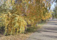 Спалювати листя у місті забороняє закон!