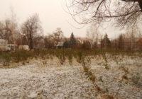 Фото дня, з першим снігом, Роздільна!