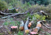 Незаконна вирубка лісу карається законом