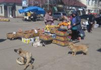 Небезпечні безпритульні собаки