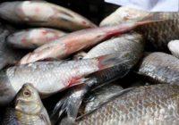 Затримано незаконних рибалок