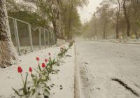 Роздільна в снігу, 20 квітня