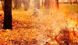 12 та 13 жовтня у Роздільній «День довкілля»