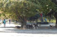 Фото дня: безпритульних собак у Роздільній більшає