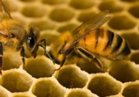 ПАМ'ЯТКАщодо профілактики отруєнь медоносних бджіл