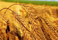 Відповідь на звернення районної ради щодо запровадження обігу земель сільськогосппризначення