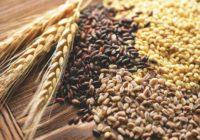 Яких зернових культур аграрії реалізували найбільше