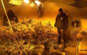 На ОдещиніСБУблокувала діяльність торгівців марихуаною
