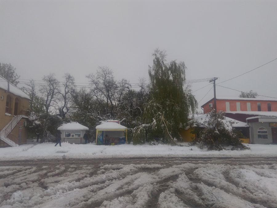 21 квітня роздільнянці мають нагоду спостерігати наслідки снігової заметілі, яка була напередодні весь день. Картина не з приємних