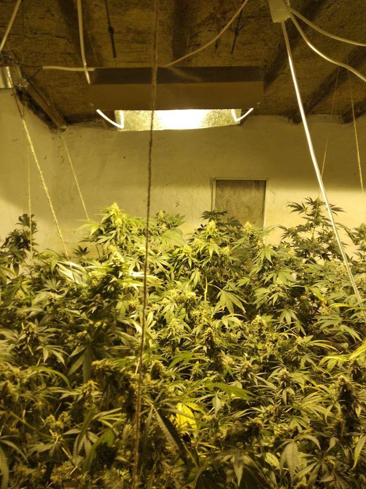 Выращивание конопли в небольших размерах изьяли марихуану что будет