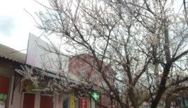 Світлини дня: у Роздільній цвітуть квіти та дерева
