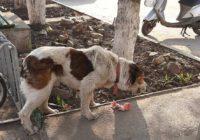 Допоможемо собаці знайти господаря!!!