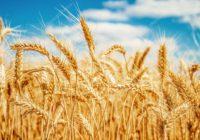 Як отримати земельну ділянку для веденняособистого селянського господарствав межах населеного пункту?