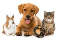 Права споживачів: чи можна перевозити тварин у громадському транспорті