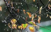 Україні прогнозують до +2°, дощ та мокрий сніг