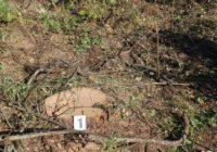 За незаконну вирубку лісу та лісосмугпередбачена відповідальність